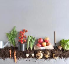 Evde Kompost Uygulamaları